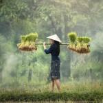 马来西亚热带雨林深处的劳作