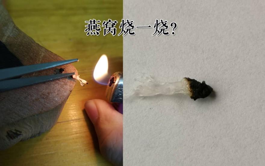 【燕窝碎】燕窝拿来烧的话是怎么样的一种体验?