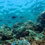【马来西亚潜水】仙本那在哪里?自由行过去好玩吗?