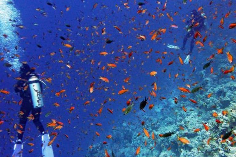 马来西亚潜水天堂诗巴丹在哪里?
