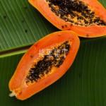 怀孕吃什么水果好?经常吃木瓜好不好的?