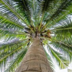 【南洋大生意】日常生活中无所不在的马来西亚棕榈油大应用