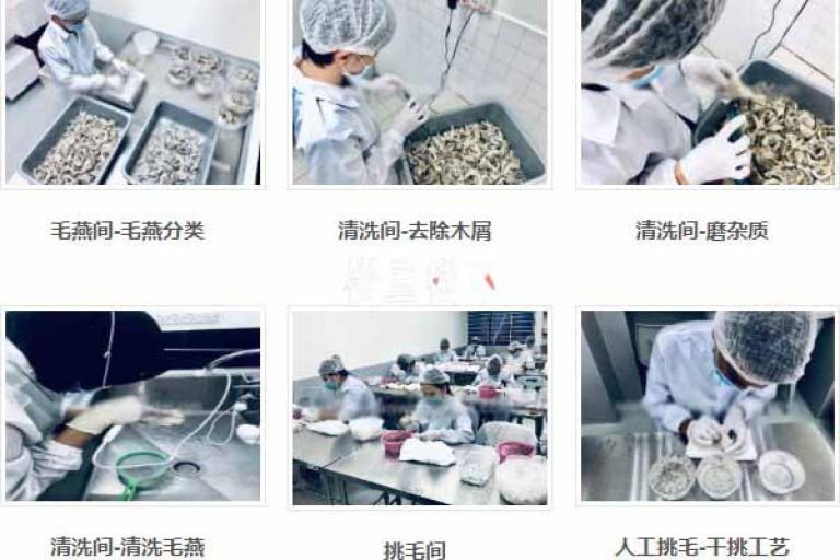 马来西亚燕窝挑毛厂生产步骤综述及其过程注意事项提示