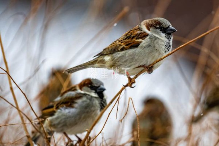 吃燕窝会不会得禽流感,干燕窝有禽流感病毒吗
